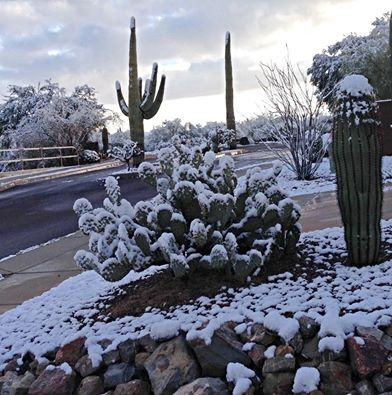 Winter on New Year's Eve in Tucson 2014 going into 2015. Linda Mc's yard.
